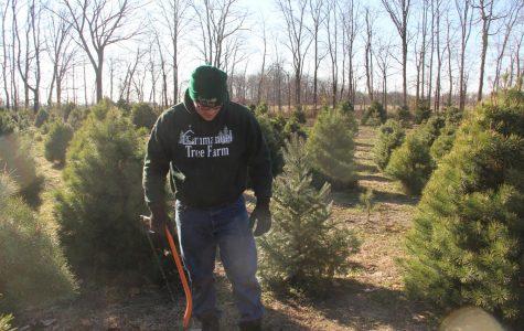 Visiting the tree farm